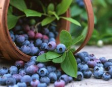 bilberries